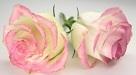 My Islamic clothing roses